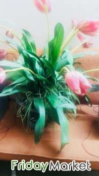 A beautiful Floral arrangements for cheapest price in Kuwait